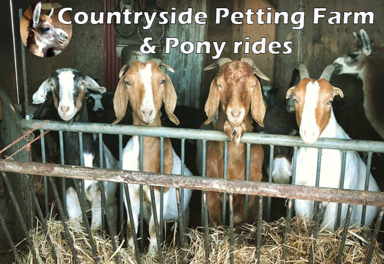 CountrySidePettingFarm